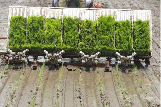 VST Yanji Shakti 8 Row Paddy Transplanter Specifications