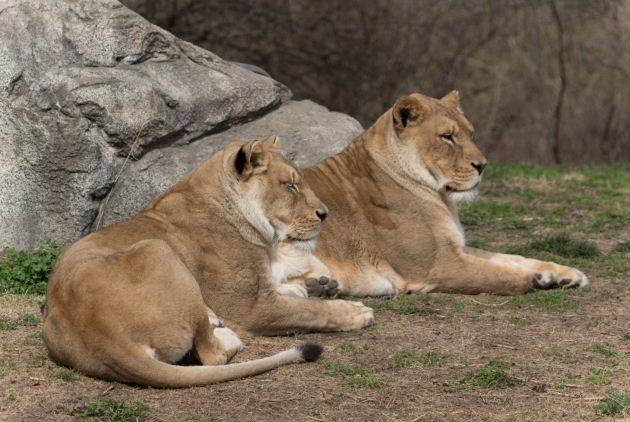 Kansas City Zoo Guest Satisfaction Survey